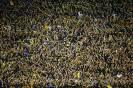 (2015) Boca Juniors - Banfield
